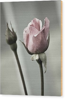 Antique Pink Rose Wood Print by Marion McCristall