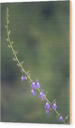 Wood Print featuring the photograph Antirrhinum Nuttallianum by Alexander Kunz