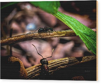 Ants Adventure Wood Print by Bob Orsillo