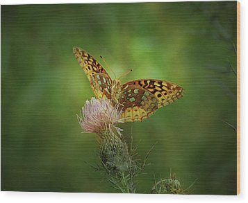 Wood Print featuring the photograph Aphrodite Fritillary Butterfly by Sandy Keeton