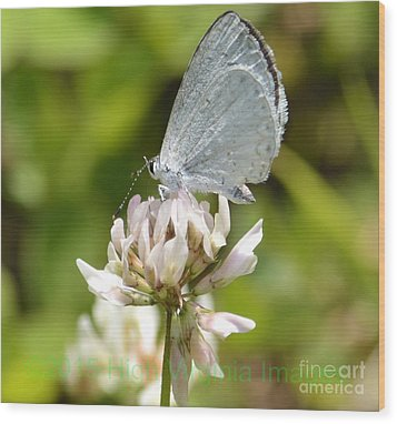Wood Print featuring the photograph Appalachian Azure by Randy Bodkins