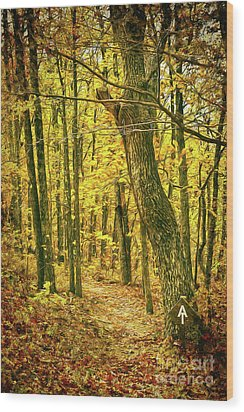 Wood Print featuring the photograph Appalachian Trail In The Blue Ridge In Autumn Ap by Dan Carmichael