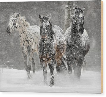 Appaloosa Winter Wood Print