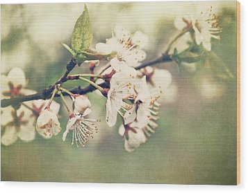 Apple Blossom Branch In Early Spring Wood Print by Sandra Cunningham