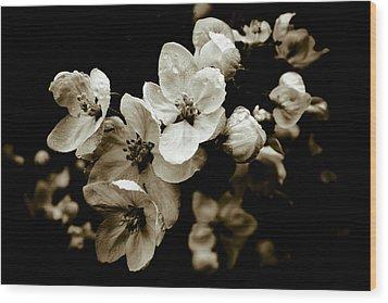 Apple Blossom Wood Print by Frank Tschakert