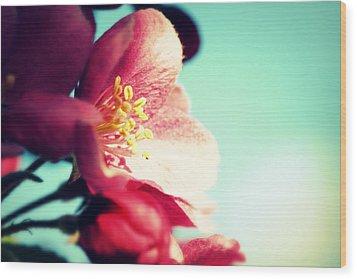 Apple Blossom Wood Print by Lisa Knechtel