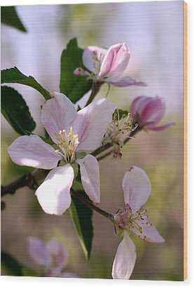 Wood Print featuring the photograph Apple Blossom Time by Diane Merkle