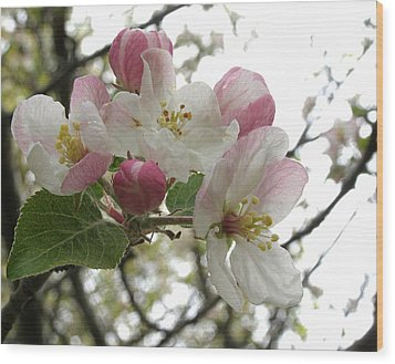 Wood Print featuring the photograph Apple Blossoms - Wild Apple by Angie Rea