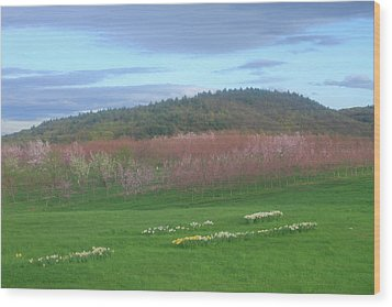 Apple Blossoms In Spring Wood Print by John Burk