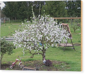Apple Blossoms Wood Print by Laurie Kidd