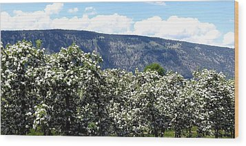 Apple Blossoms Wood Print by Will Borden