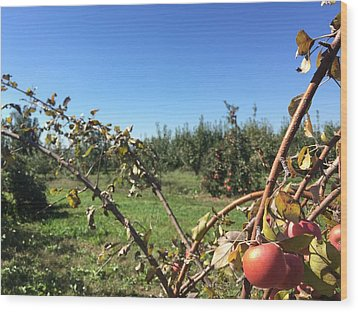 Apple Orchard 1 Wood Print by Jason Nicholas