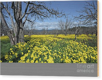 Wood Print featuring the photograph Apple Orchard In January by Stan and Anne Foster