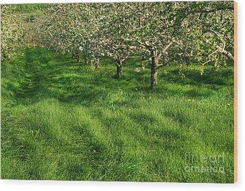 Apple Orchard Wood Print by Sandra Cunningham