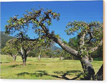 Apple Orchards Of Oak Glen Wood Print