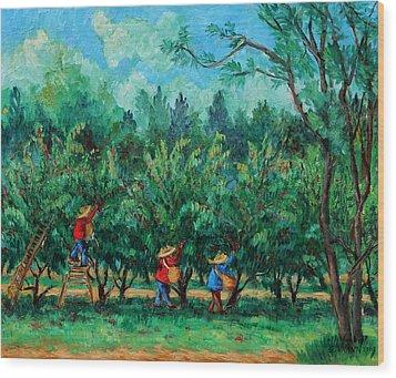 Apple Pickers  Littletree Orchard  Ithaca Ny Wood Print by Ethel Vrana