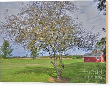 Apple Tree Wood Print by Kathleen Struckle