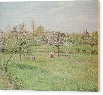 Apple Trees At Gragny Wood Print by Camille Pissarro