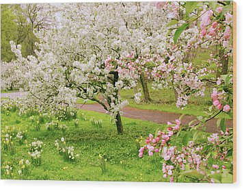 Apple Trees In Bloom Wood Print by Jessica Jenney