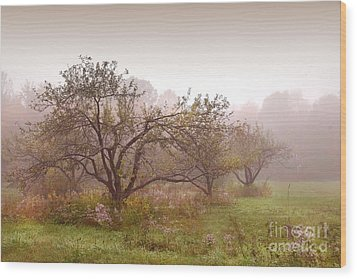 Apples Trees In The Mist Wood Print by Sandra Cunningham