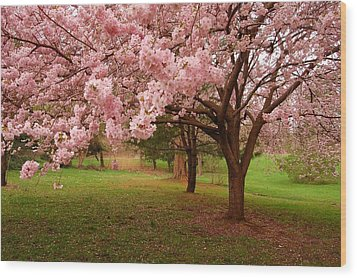 Approach Me - Holmdel Park Wood Print