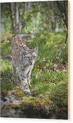 Approaching Lynx Wood Print by Yngve Alexandersson