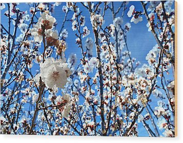 Wood Print featuring the photograph Apricot Blossoms by Glenn McCarthy Art and Photography