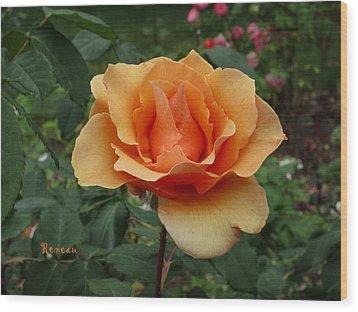 Apricot Rose Wood Print by Sadie Reneau