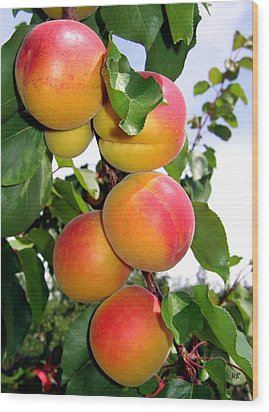 Apricots Wood Print by Will Borden