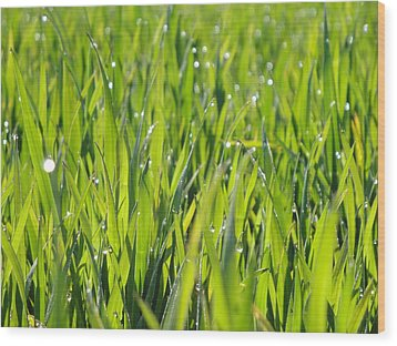 April Dewdrop Fairylights Wood Print