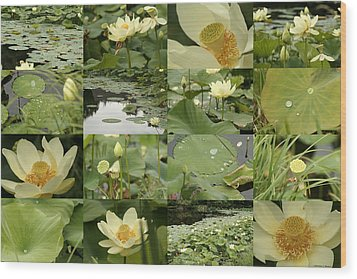 April Lotus Pond Wood Print by Robert Glover