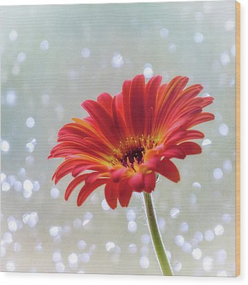 Wood Print featuring the photograph April Showers Gerbera Daisy Square by Terry DeLuco