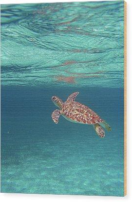Aqua Dreams Wood Print by Li Newton