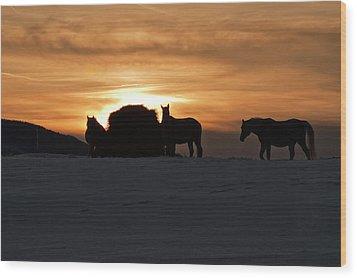 Wood Print featuring the photograph Arab Horses At Sunset by Daniel Hebard