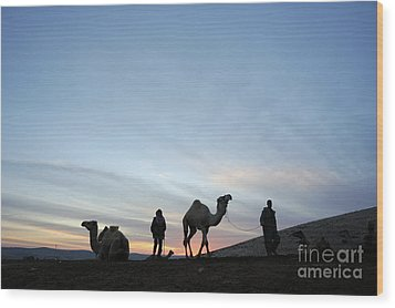 Arabian Camel At Sunset Wood Print by PhotoStock-Israel