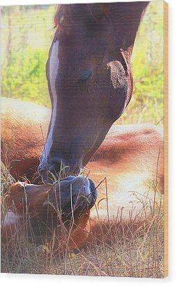 Arabian Foals - Peaceful Wood Print by ELA-EquusArt