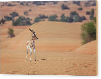 Wood Print featuring the photograph Arabian Gazelle by Alexey Stiop