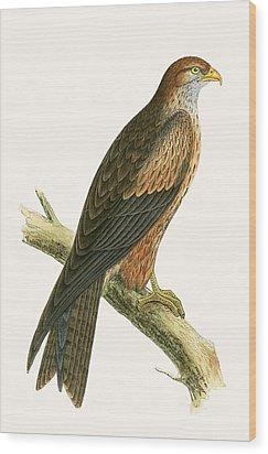 Arabian Kite Wood Print by English School