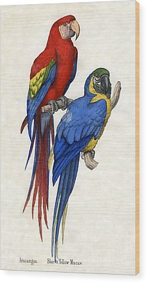 Aracangua And Blue And Yellow Macaw Wood Print