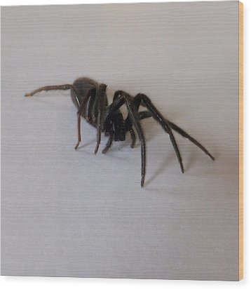 Wood Print featuring the photograph Arachne Noire by Marc Philippe Joly