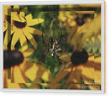 Arachnid Beauty Wood Print by Deborah Johnson