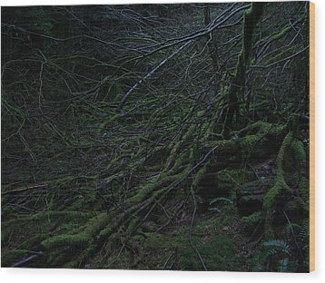 Arboreal Forest Wood Print by Jim Thomson