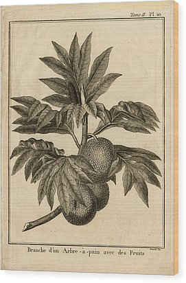 Arbre Apain Breadfruit Branch Wood Print by Benard