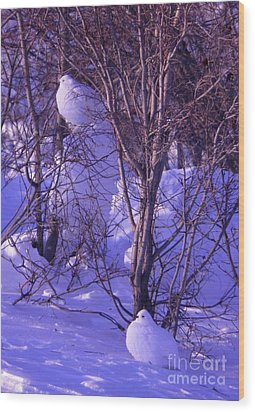 Arctic Chickens Wood Print by Adam Owen