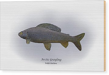 Arctic Grayling Wood Print by Ralph Martens