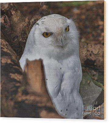 Arctic Snow Owl Wood Print
