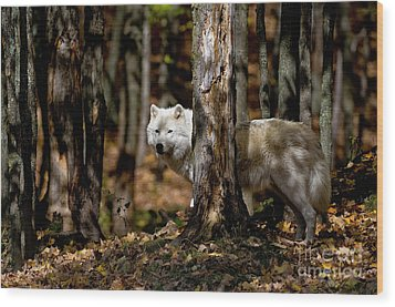 Arctic Wolf In Forest Wood Print by Michael Cummings