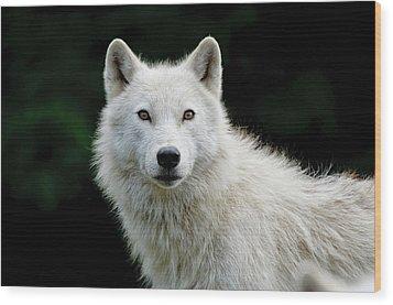 Arctic Wolf Wood Print by Michael Cummings