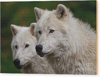 Arctic Wolf Pair Wood Print by Michael Cummings