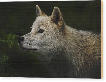 Wood Print featuring the photograph Arctic Wolf Portrait by Michael Cummings